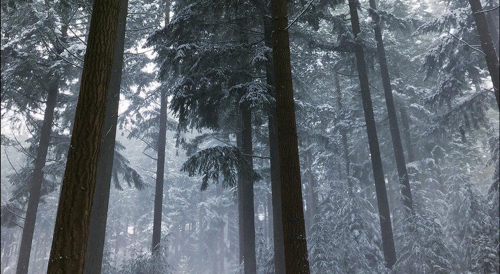 Trees 3.jpg