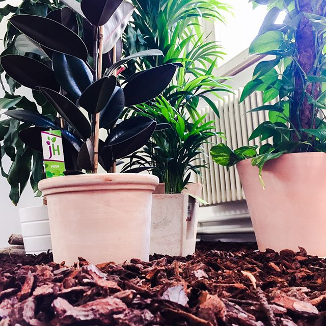 Bald heisst es: Welcome to the jungle! Unser #Greenroom wird von Tag zu Tag grüner.. 🌱🌴🌵 Ein Happy Weekend wünscht euch Apps with love!  #office #greenroom #plants #jungle #forest #nature #inspiration #growthhacking #appswithlove #appdevelopment #app #developerlife #bern #switzerland