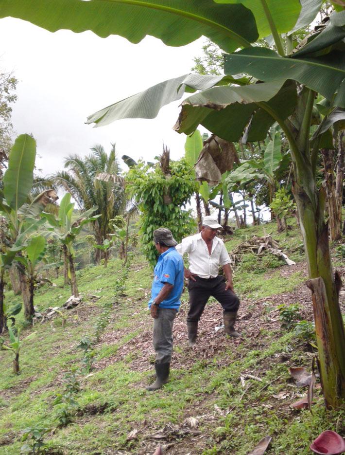 Von Kaffeepflücker zu Kaffeebauern: Brüder Gumercindo und Francesco in Costa Rica