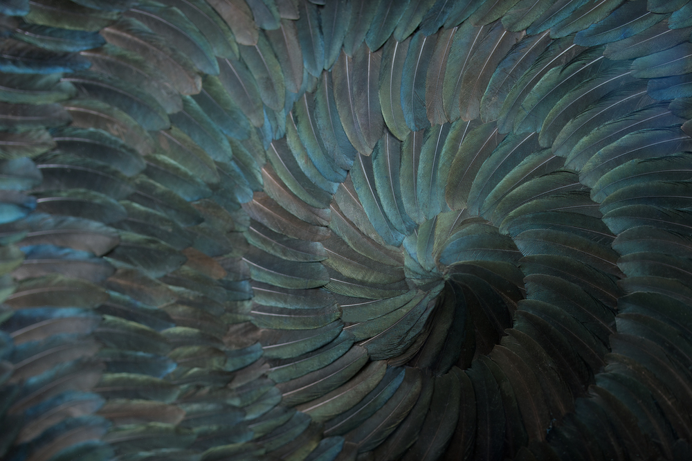 TONSURE detail- JP Bland.jpg