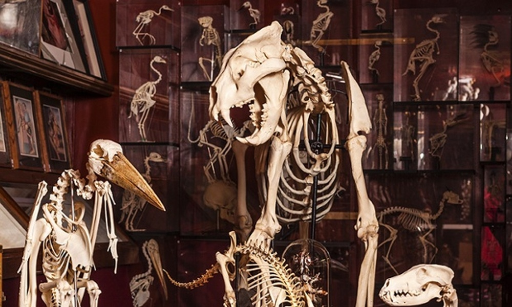Viktor Wynd's Museum of Curiosities (6).jpg