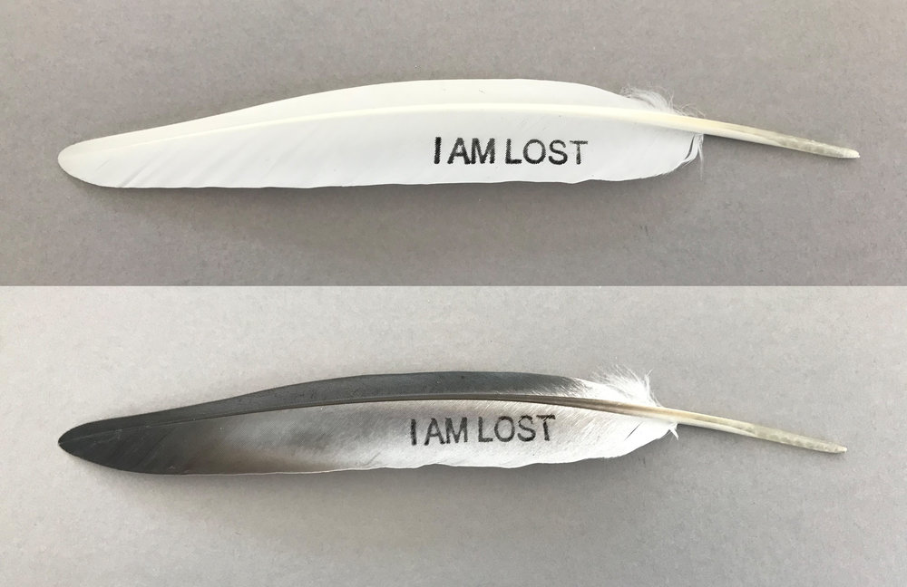 I am lost feathers.jpg