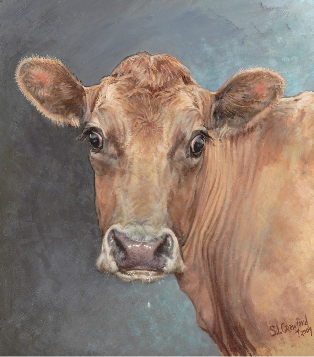 Surprised Cow
