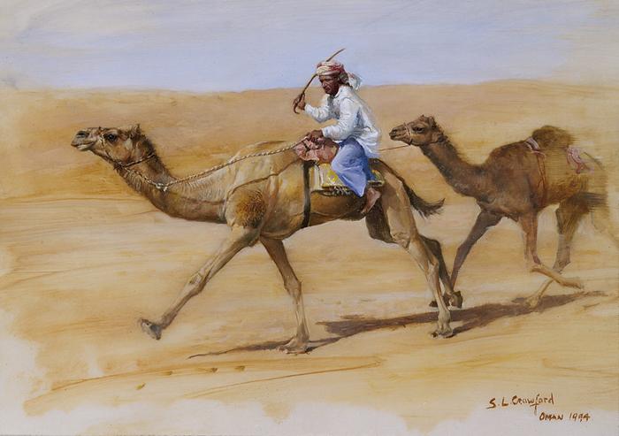 Omani Camel Racing