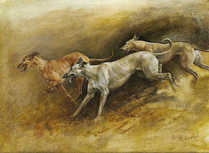 Running lurchers