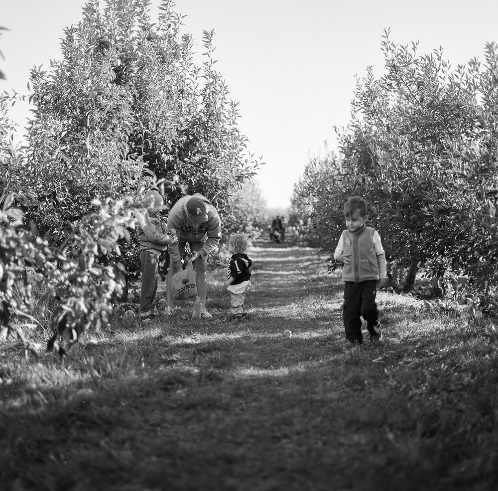apple orchard-9.jpg
