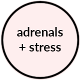 Adrenals.png
