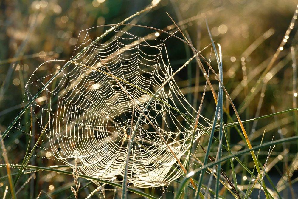 spider-web-1599470_1920.jpg
