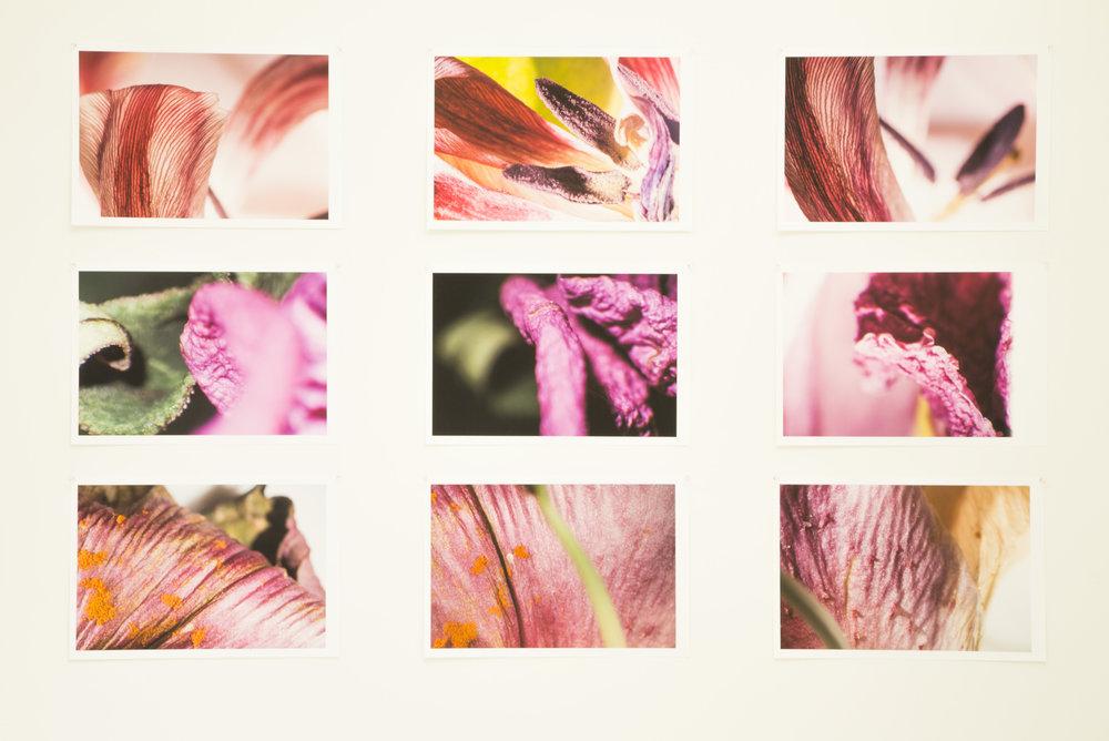LianaNigri_BioArtOpenStudios27LianaNigri_BioArtOpenStudios.jpg