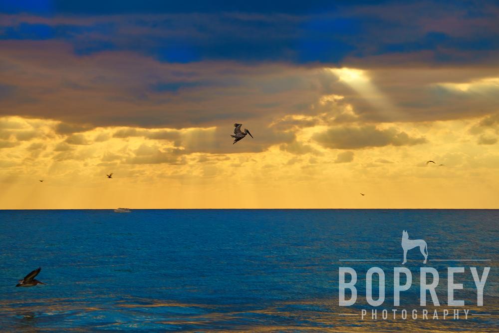 boprey-vero-beach-photography
