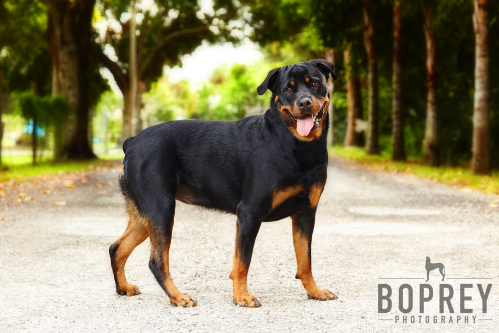 boprey-photography-nyc-pet-photography