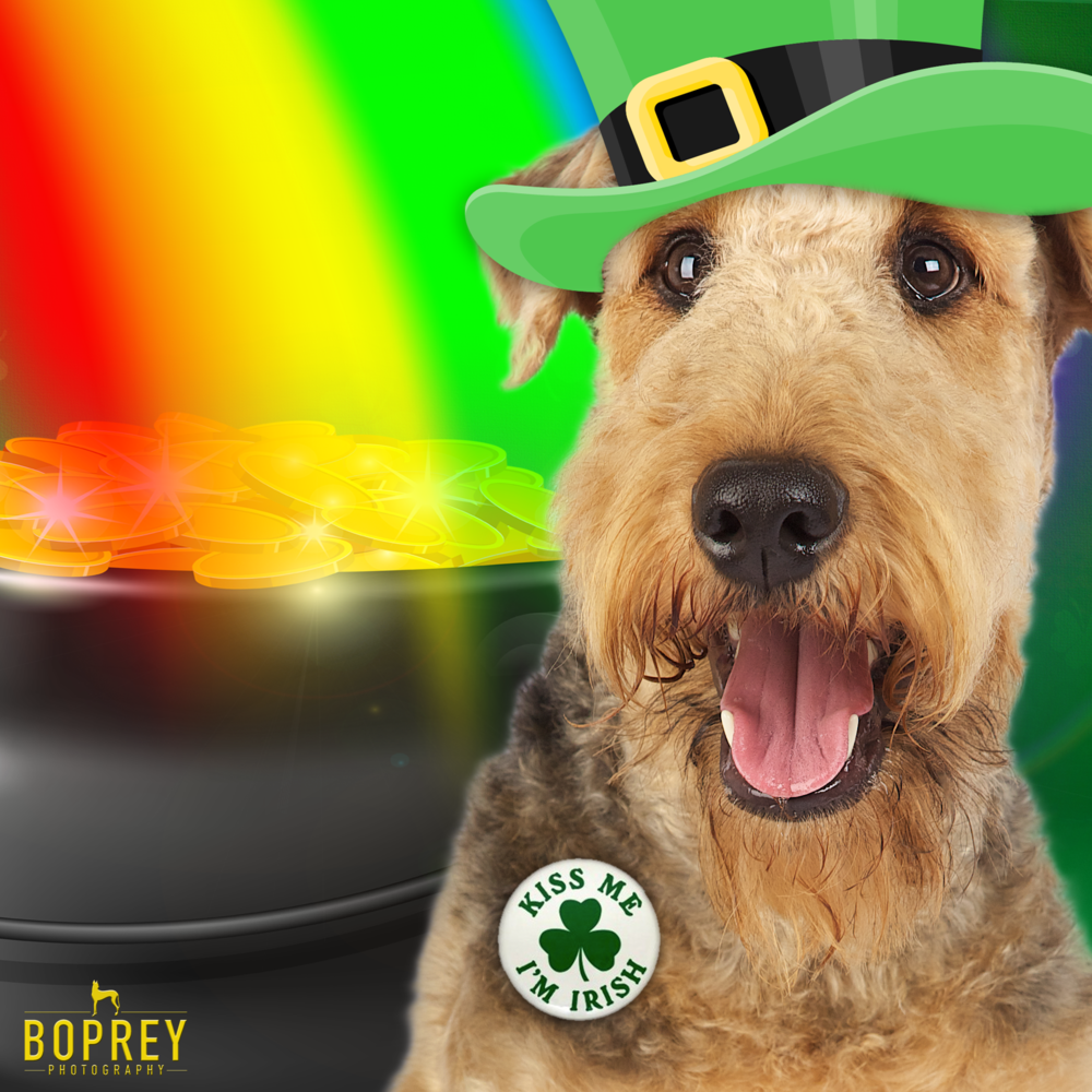 boprey-photography-st-patricks-day