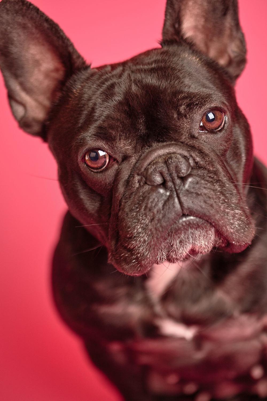 boprey-pet-photography-studio-nyc_3.jpg