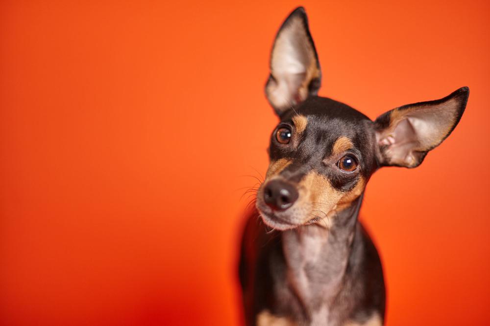 boprey-pet-photography-studio-nyc_4.jpg