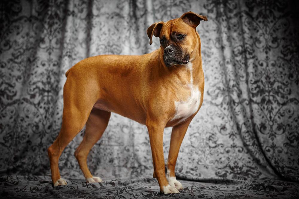 boprey-pet-photography-studio-nyc_5.jpg