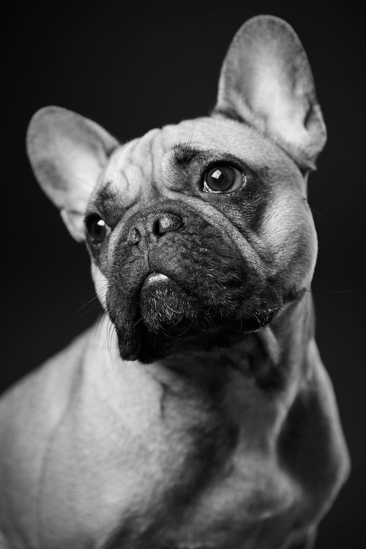 boprey-pet-photography-studio-nyc_7.jpg