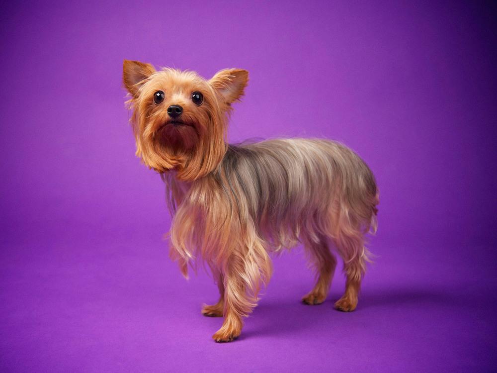 boprey-pet-photography-studio-nyc_8.jpg