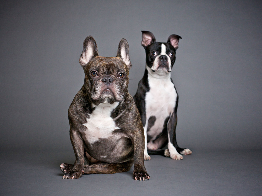 boprey-pet-photography-studio-nyc_11.jpg