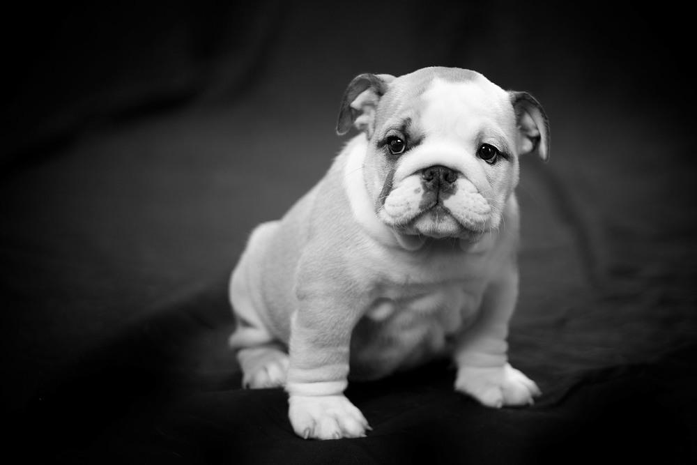 boprey-pet-photography-studio-nyc_12.jpg
