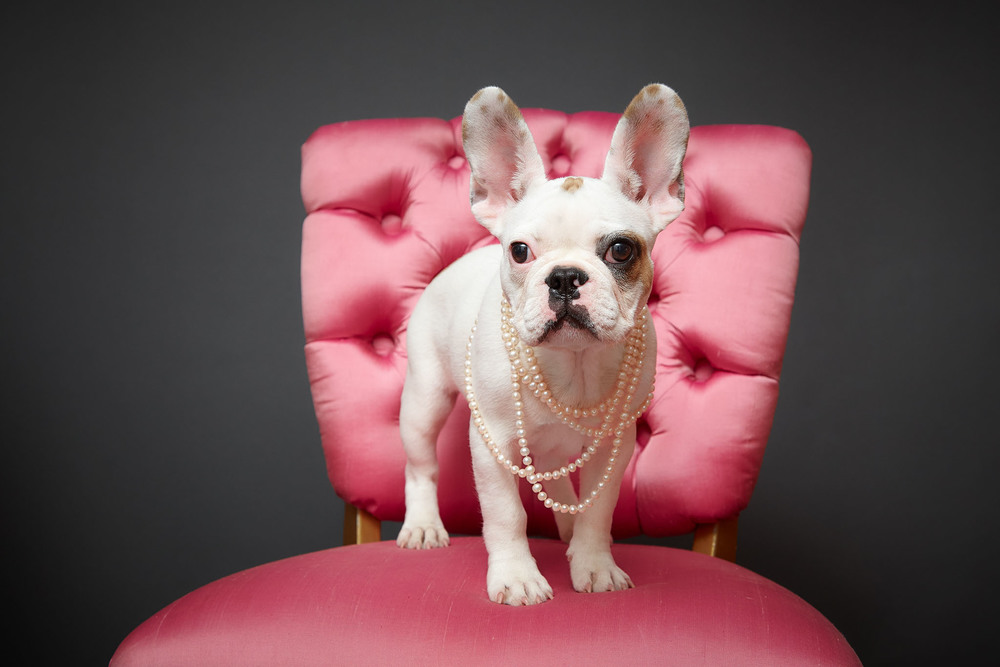 boprey-pet-photography-studio-nyc_13.jpg