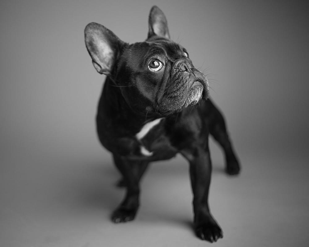 boprey-pet-photography-studio-nyc_17.jpg