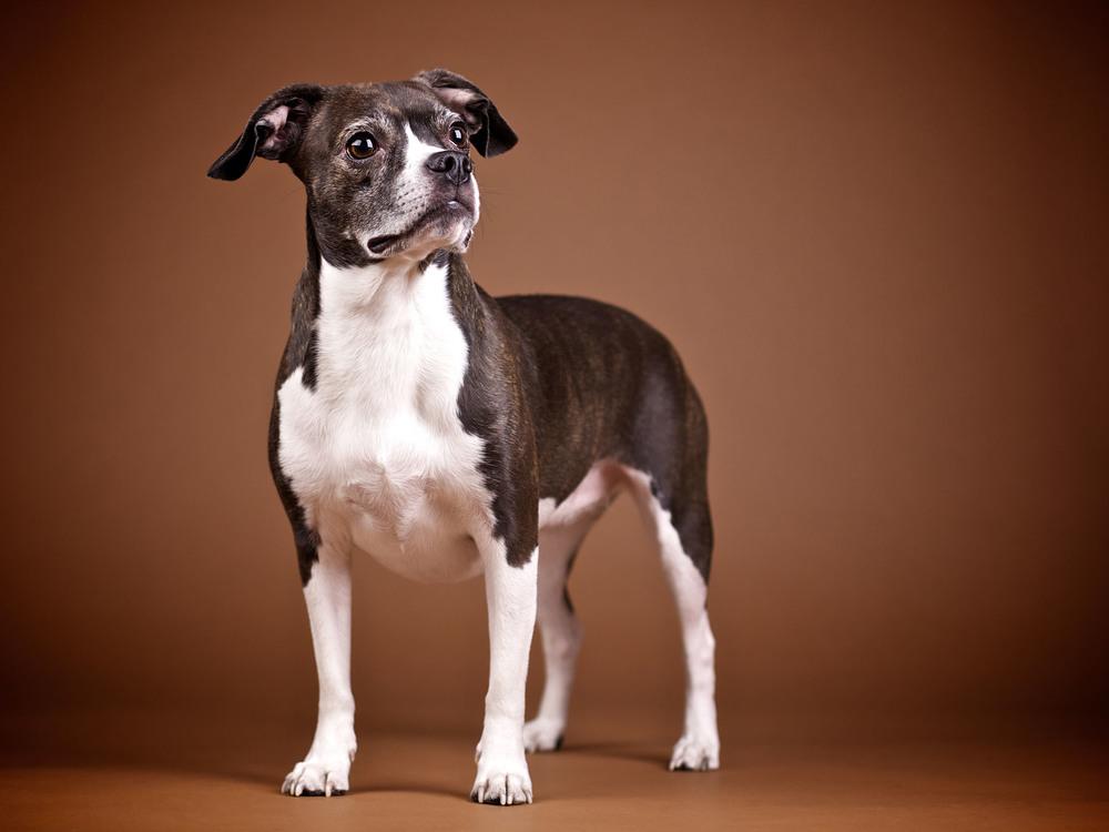 boprey-pet-photography-studio-nyc_19.jpg