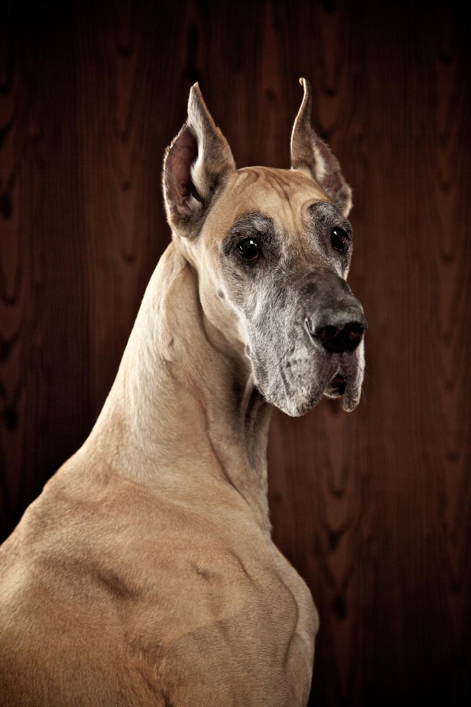 boprey-pet-photography-studio-nyc_20.jpg