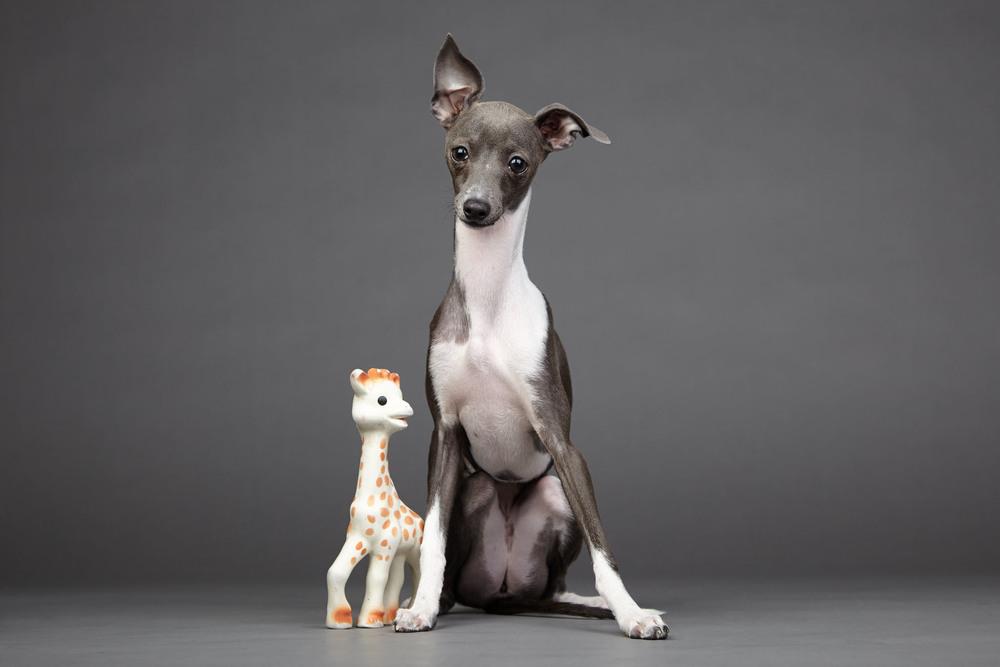 boprey-pet-photography-studio-nyc_23.jpg
