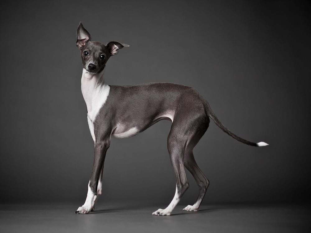 boprey-pet-photography-studio-nyc_24.jpg