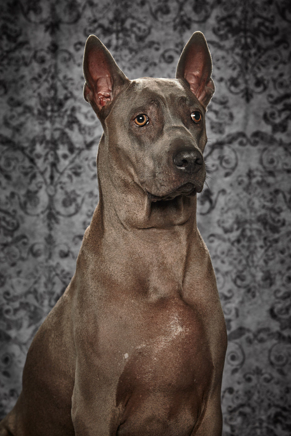 boprey-pet-photography-studio-nyc_31.jpg