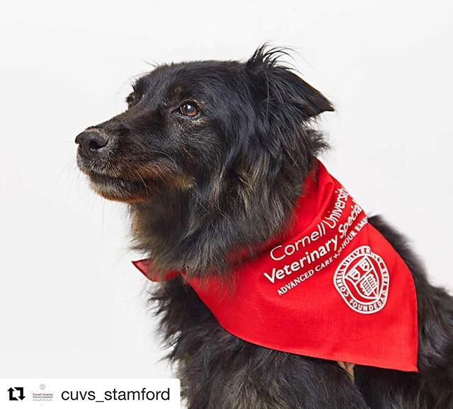 #Repost @cuvs_stamford ・・・ It's hard enough having one severe disease...Willow overcame two! She and her family were superstars throughout her whole ordeal. She is truly a Courageous Companion!  Thanks, once again, to Marshall Boprey of @bopreyphoto for all of our great Courageous Companion photos! #courageouscompanions #pets #dogs #cuvs #cornelluniversityveterinaryspecialists #stamford #veterinaryhospital // #petphotography #bopreyphoto #cherishedmemories #nyc #ct #connecticut #stamford #uplifting