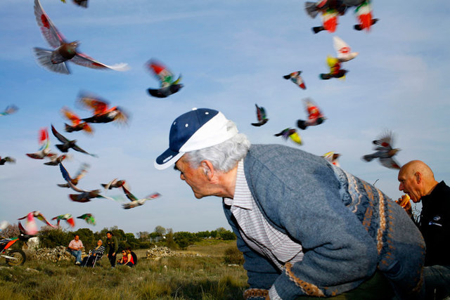 """Man surrounded by pigeons"" from the series Paloma al aire, 2011"