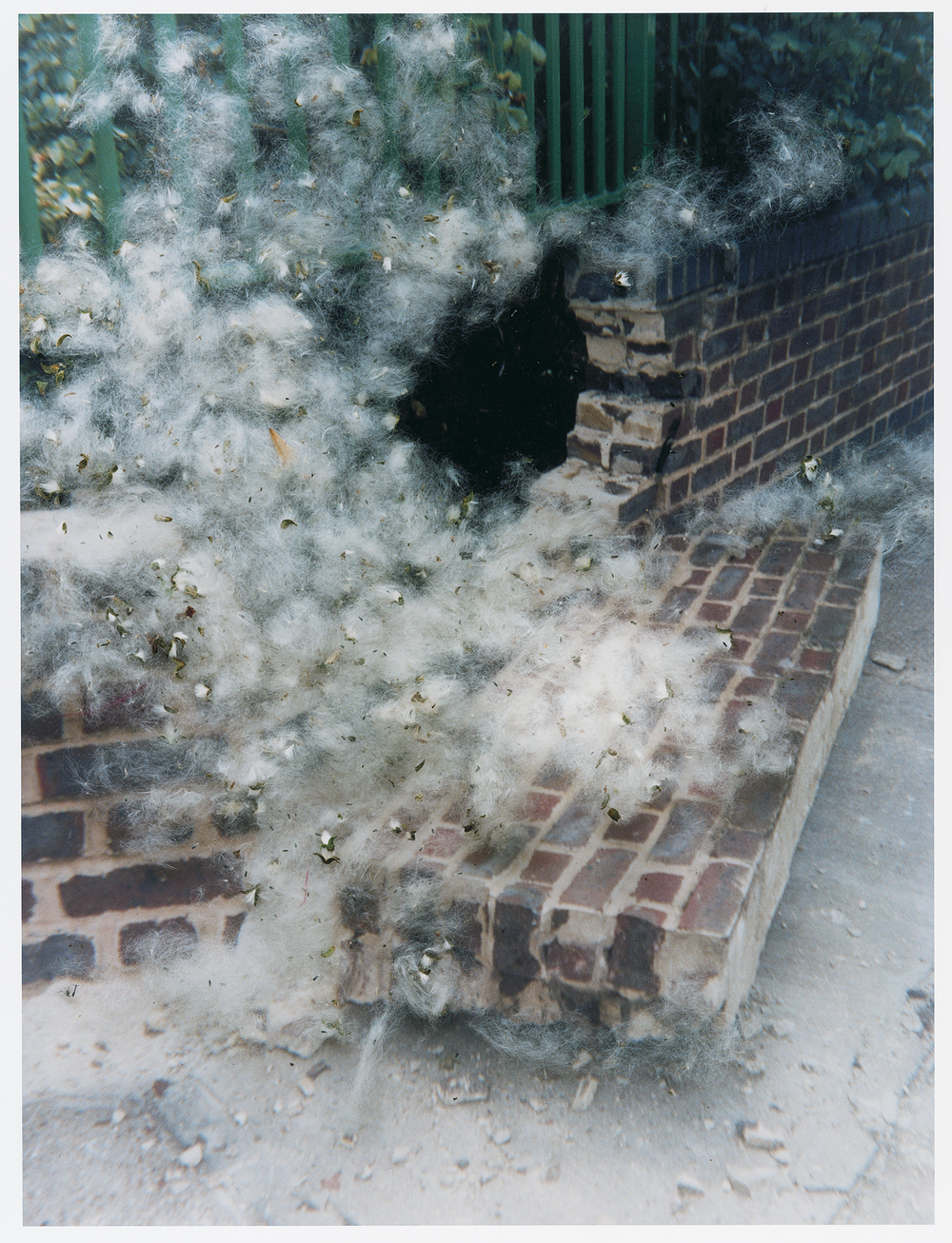 """Untitled"" from the series Hackney Flowers, 2005 - 2007"