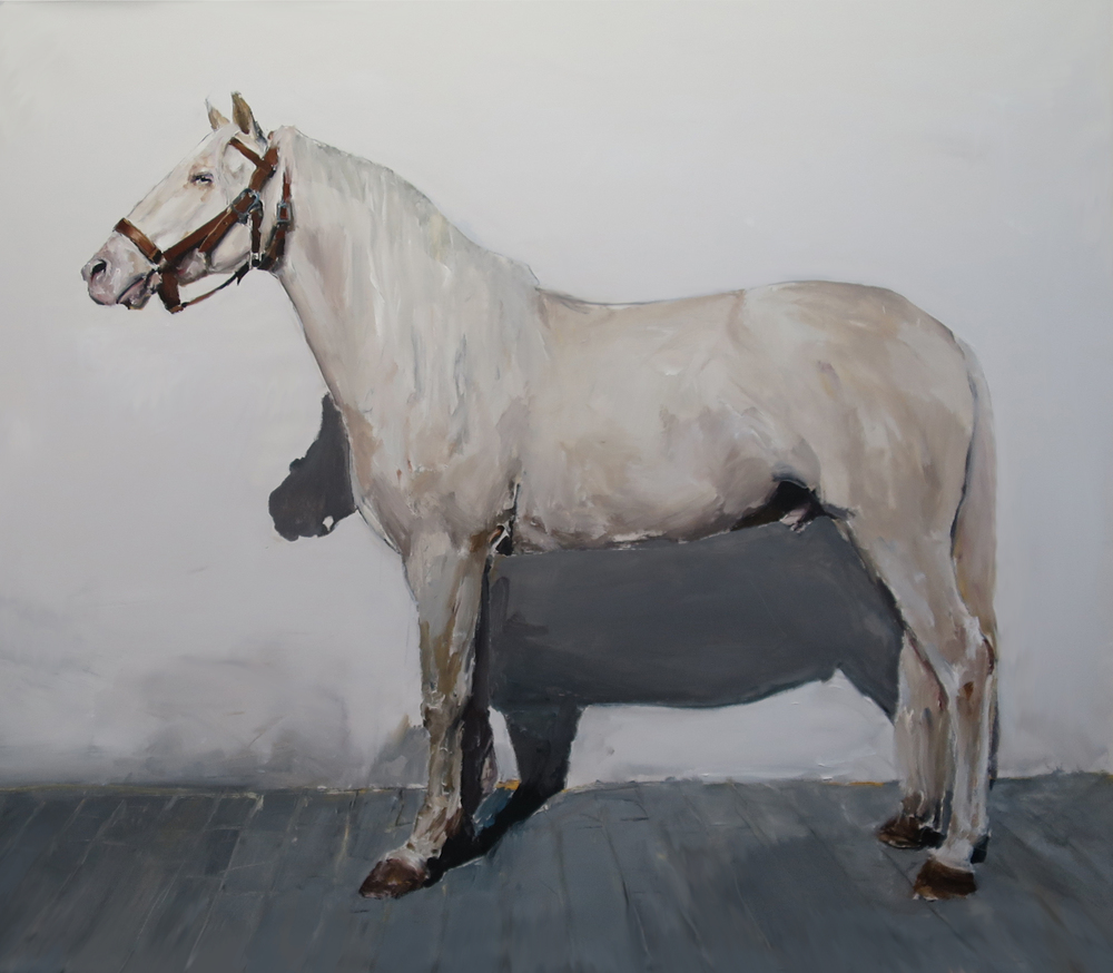 Untitled (white horse with halter)