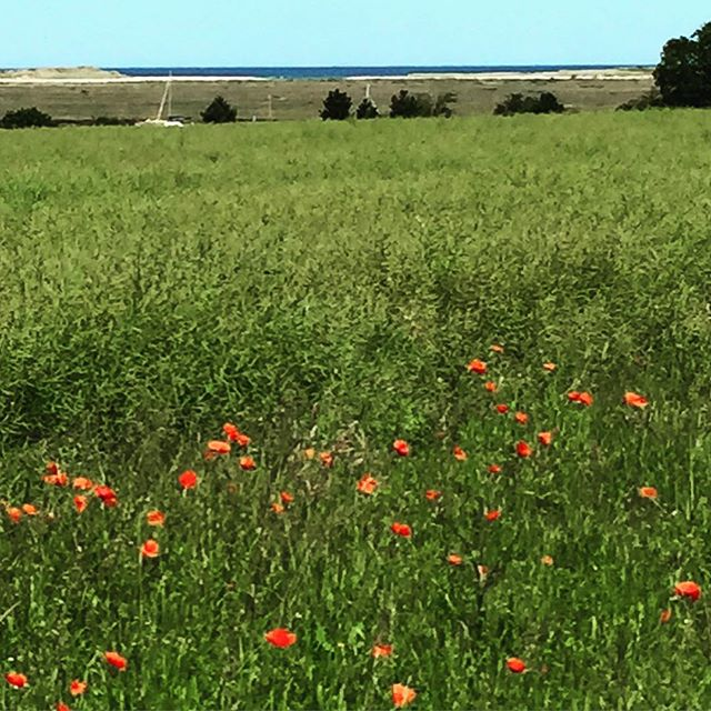 Poppies to mark the start of The Poppy Appeal 2016 - Rethink Remembrance