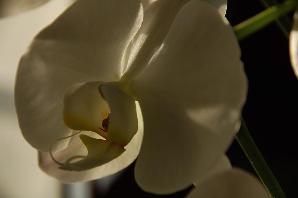 Orquídeas a las 7 2010