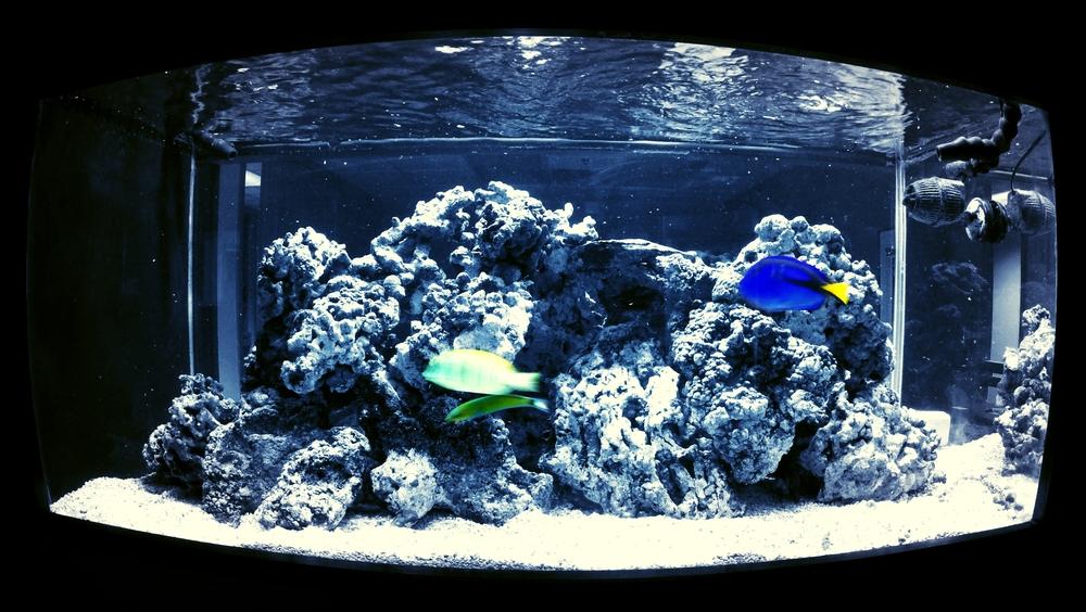 fish1-1.jpg