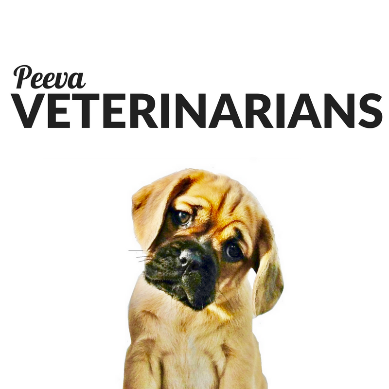 peeva for veterinarians.png