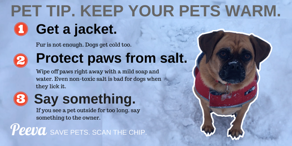 Peeva COLD WEATHER TIPS FOR PETS..png