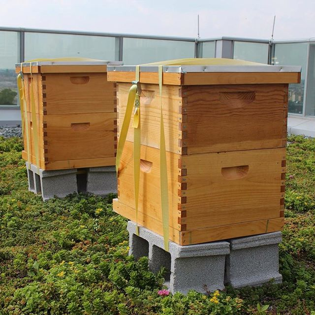Visited our friends @worldbicyclerelief and discovered bees on the roof! Grateful to see efforts to save the bees! #savethebees #bees #honeybees #organic #urbanfarming #cycling #nonprofit #midwest #beefriendly #tea #icedtea #organictea #fairtrade #nongmo #healthydrink #nongmoverified #chicagoyoga #chicagofoodie #premiumtea #conscious #consciousness #yoga #ayurveda #wellness #fitness #nutrition #freedom #love