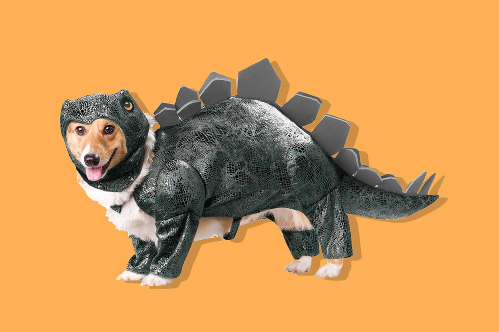 """""""The 13 Best Dog Costumes on Amazon, According to Hyperenthusiastic Reviewers"""""""