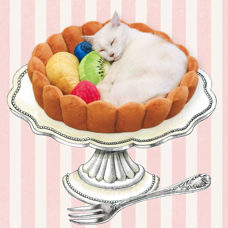 "I want to be this cat or own this cat bed.  ""The feline-focused Japanese novelty company  Felissimo  has created an adorable  cat bed shaped like the fluted crust of a fruit tart  and even comes with hand stitched pillows in the shapes of various fruits and berries to keep kitty comfy and complete the look of a yummy desert."""