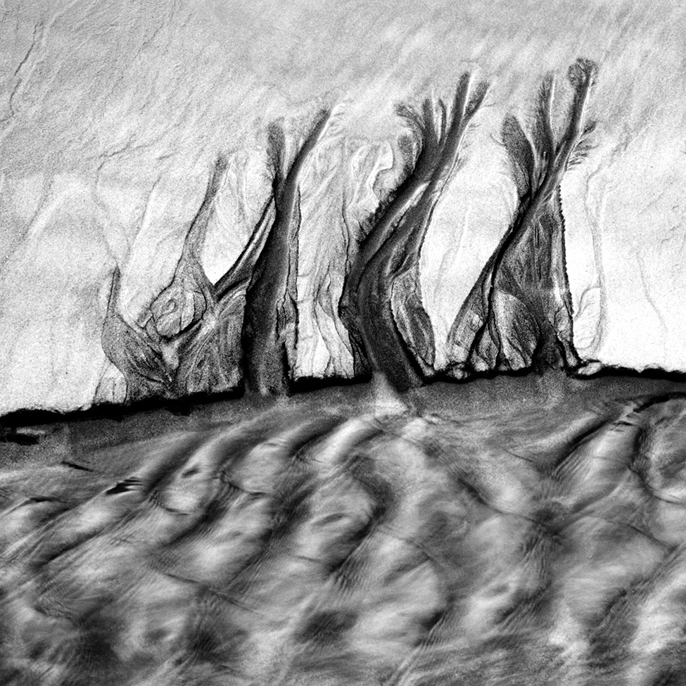 Trees by a Velvet Sea