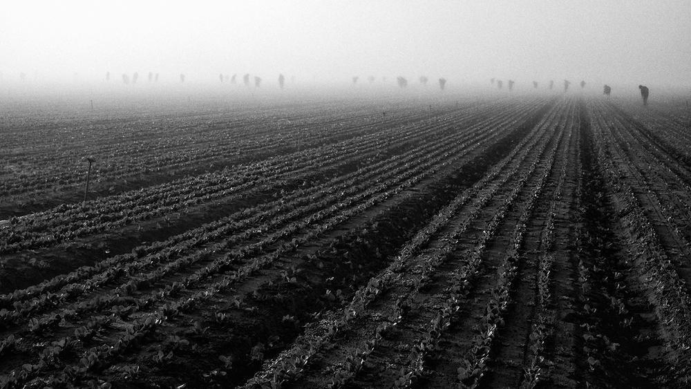 Lettuce Workers