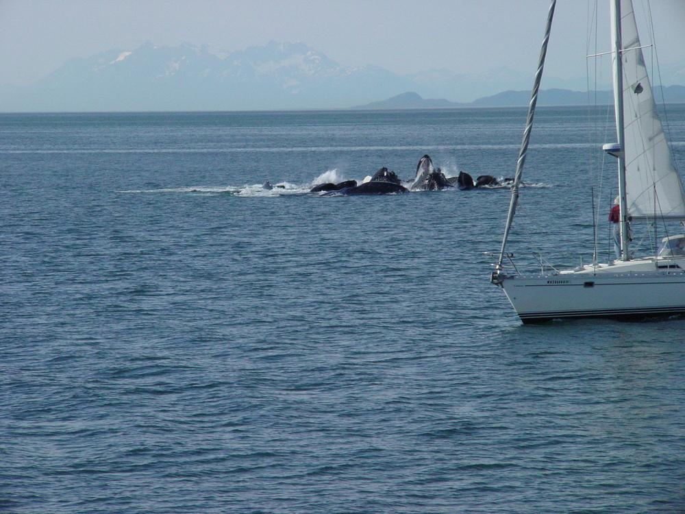 A75-Alaska_016.jpg