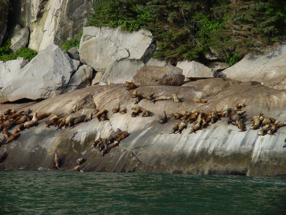 A75-Alaska_029.jpg
