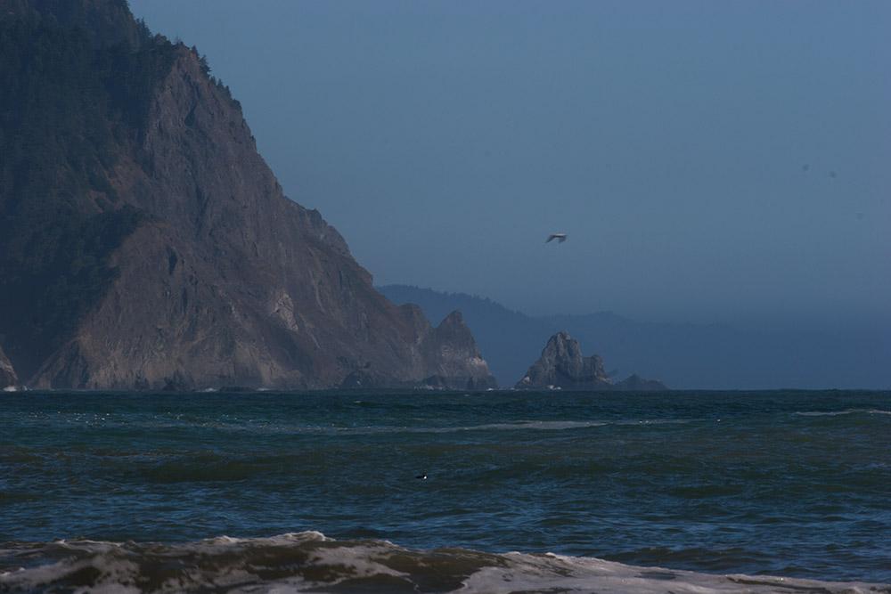 A80_Pacific_Coast_2006-Lost_Coast_C20_3427-068.jpg