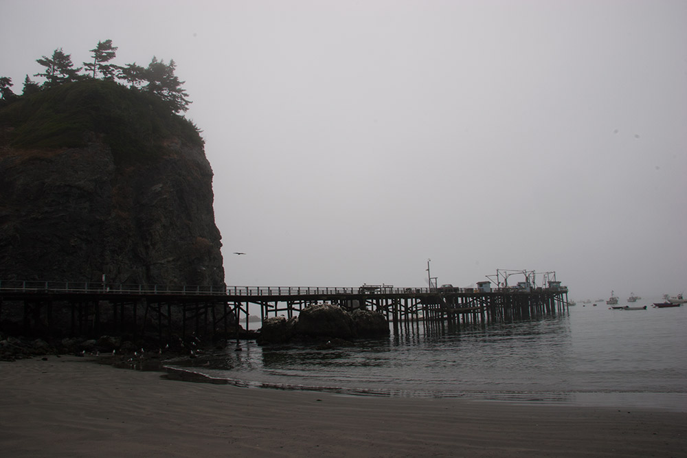 A80_Pacific_Coast_2006-Lost_Coast_C20_3503-084.jpg