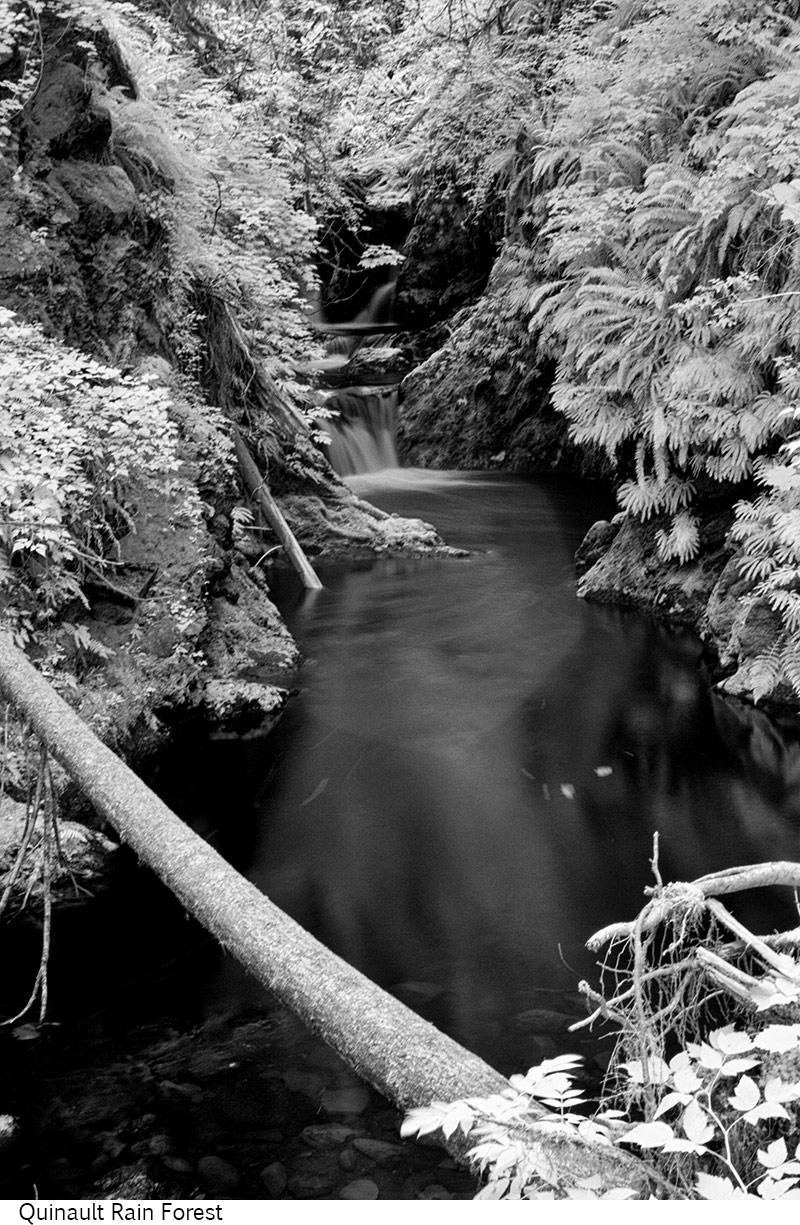 Quinault_Rain_Forest_C20_080208_008 copy.jpg