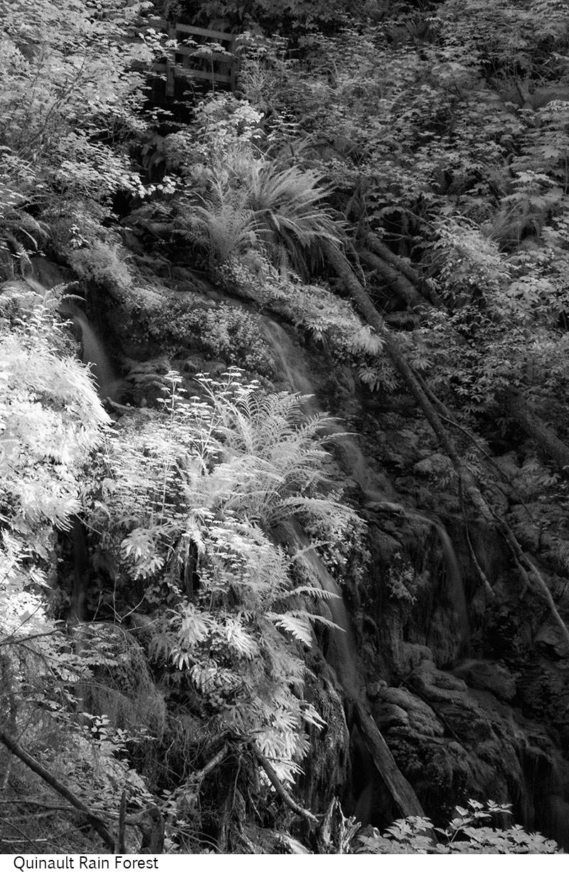 Quinault_Rain_Forest_C20_080208_029 copy.jpg